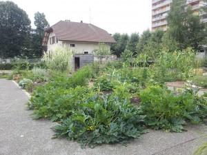 parcelle incroyables comestibles jardin du manoir de novel